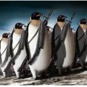 avatar of Penguinator
