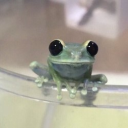 Froge's avatar