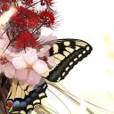 Butterfly Bot
