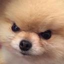 YatBOT's avatar