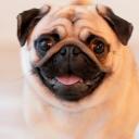 avatar of LovePug<3