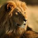 LionBot's avatar