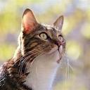 kit cat your cat's avatar