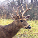 avatar of Buck