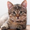 cat bot's avatar