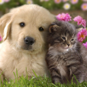 Cute Cats and Dogs's avatar