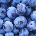 Blueberry's avatar