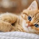 Cat Images's avatar