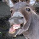 Donkey Bot