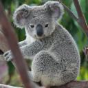 Koalaya™