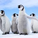 Stupid Penguin Fans's avatar
