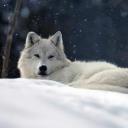Dylan The Tweenage Wolf