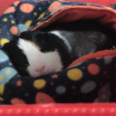 guinea pigs's avatar