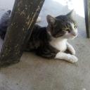 Cat Server's avatar